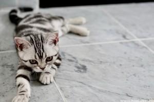 Olcsó és egyszerű macskajátékok