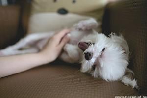 Hogyan neveljünk boldog és egészséges háziállatokat?