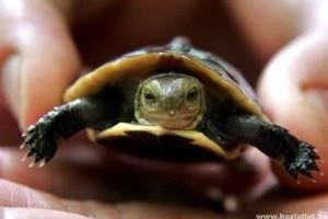 A teknős és a két macska - vicces videó