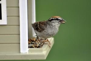 Élő webkamerás közvetítés a madarakról