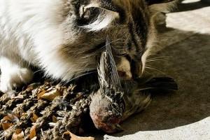 Túlszaporodott cicák tizedelik a madarakat