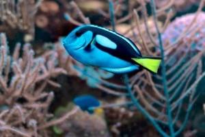 Tengeri akvárium: belevaló halfajok - top 5