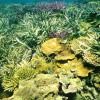 Tengeri akvarisztika: korall
