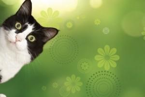 Állateledel: Finomenális ételek macskáknak