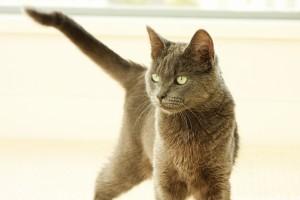 Mit mond a macska farka?