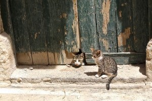 Milyen a jó macskaajtó?