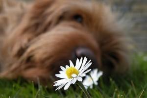 Allergia ellen homeopátiás deszenzibilizálás
