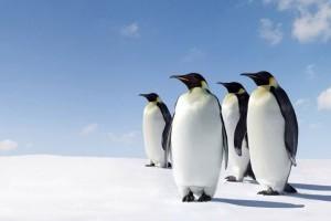 15 érdekesség a pingvinekről