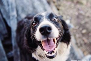 A kutyák és a hőguta: ismered fel a tüneteit!