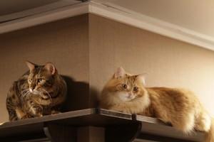 A macskák társadalmi interakciói