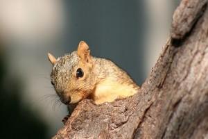 Megdolgozik a mókus az ételért - vicces videó
