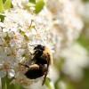 A darazsak és a méhek