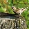Vörös riasztás – itassuk a madarakat!
