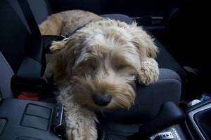Kiesett a kutyus a kocsiból az autópályán