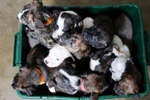A szemétbe dobták ki az ártatlan kiskutyákat