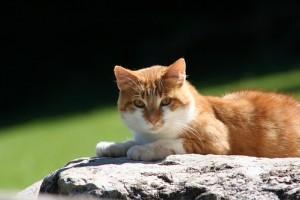 Egy hűséges cica egy hónapig várta a gazdáját egy repülőgéproncsban