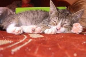 Bájos kiscicák álomgazdit keresnek!