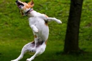Ugat, rág vagy virágot gyomlál a kutyád?