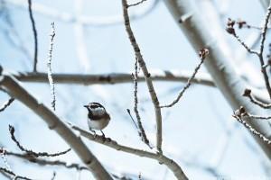 Téli madáretetés: mivel, hogyan és mikor?