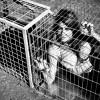 Láncravert és ketrecbe zárt sztárok - Fotókiállítás a kóbor állatokért