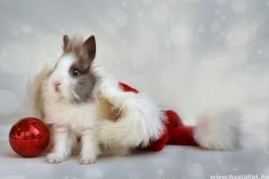 A karácsony és a nyuszi: figyeljünk a veszélyforrásokra