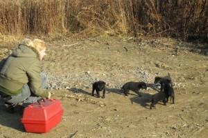 Anya nélküli, fekete kiskutyák keresik a gazdijukat