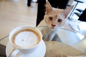 Macskás kávéház nyílik Bécsben
