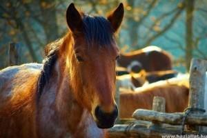 Az első ló megvétele