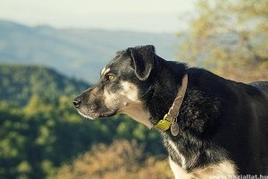 Tanácsok az örökbefogadott kutya neveléséhez