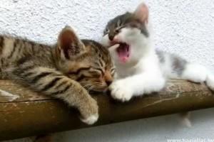 Ha a cica nem akar felébredni... Videóval