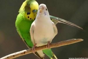 Miért olyan változatosak a madarak?