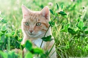 Segíts a cicádnak elviselni a hőséget!