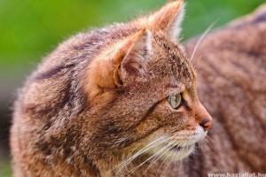 Nálunk nem szokás a cicát orvoshoz vinni