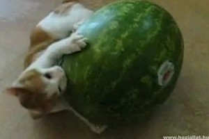 Görögdinnye vs. macska