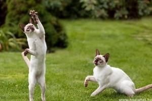 Macska: anatómia, testfelépítés
