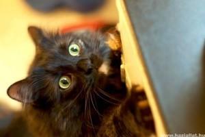 Milyen a macska vitaminigénye?