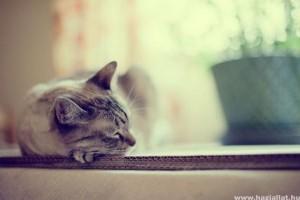 Macska: balesetek, sérülések