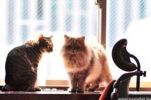 Macska elsősegélynyújtás