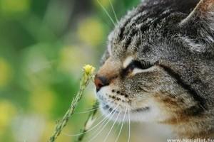 Macska mérgezések, mérgező növények