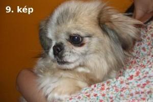 Szilveszterkor eltűnt és talált kutyák