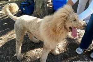 Oroszlánriadó egy kutya miatt