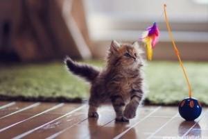 Simon macskája: a rejtett kincs...