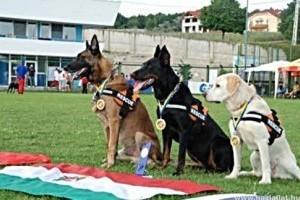 A világ 40, nemzetközileg bevethető mentőkutyája közül három magyar