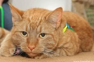 Kutyavérrel mentettek meg egy macskát állatorvosok