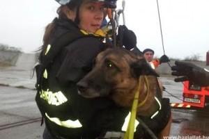 Magyar mentőkutya a világ legjobbjai között