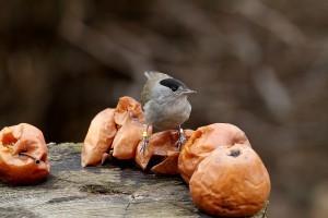 Elindult a madáretetési szezon