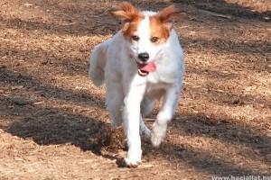Mit tegyek, hogy ha találtam, vagy elhagytam egy kutyát?