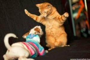 Kutya vs macska - szupercuki videó!
