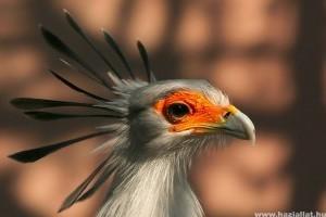 Elkészült a kihalófélben lévő egzotikus madarak százas listája