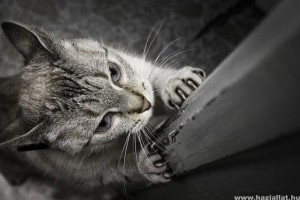 Miért kapar a macska és hogyan szoktassuk le róla?